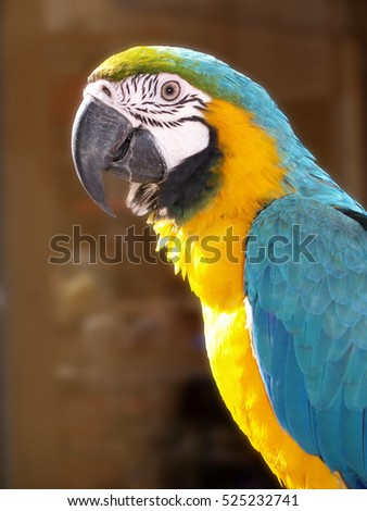 Side portrait of a parrot with yellow and cyan feathers outdoors under sunshine #525232741
