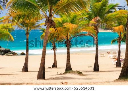 Beautiful tropical palm trees at popular touristic Condado beach in San Juan, Puerto Rico Royalty-Free Stock Photo #525514531