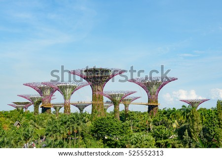 Singapore Supertrees in garden by the bay at Bay South Singapore. #525552313