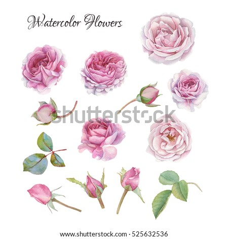 Flowers set of hand drawn watercolor roses and leaves