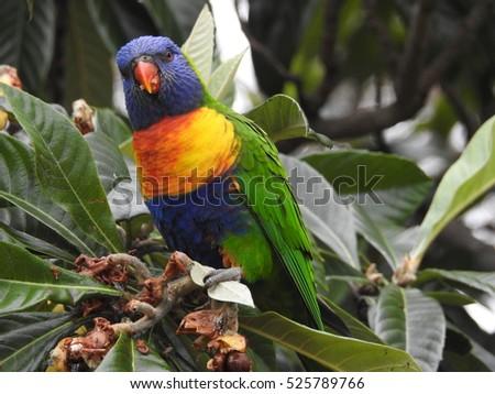 Parrot #525789766