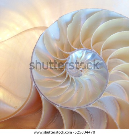 shell pearl nautilus Fibonacci section spiral pearl symmetry half cross golden ratio shell fibonacci structure growth close up mother of pearl ( pompilius nautilus ) - stock photo photograph image Royalty-Free Stock Photo #525804478