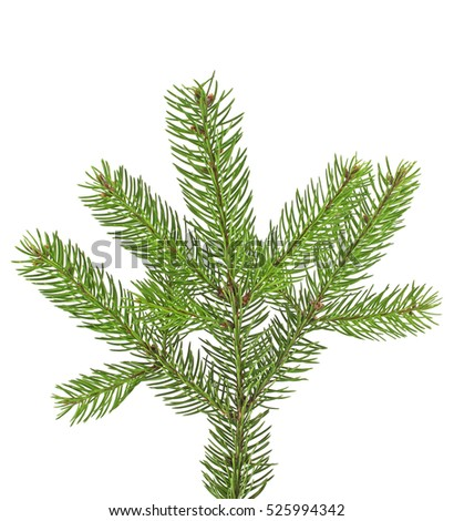 Green fir branch for christmas, isolated on white background #525994342