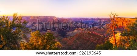 panorama of Grand canyon  at sunset in summer,Arizona,usa. #526195645