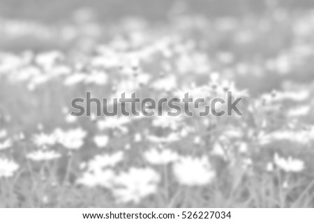 Blurred abstract background of White flower #526227034