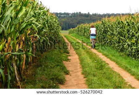 cycling between the cornfields #526270042
