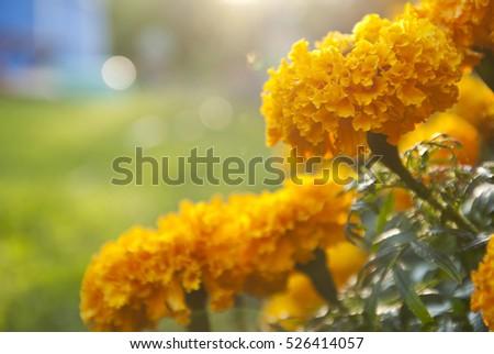 Illustration of summer flowers #526414057