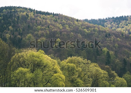 colorful countryside view in carpathians. mountains and forest trees with green meadows - vintage retro #526509301