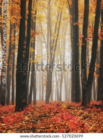 autumn forest #527020699