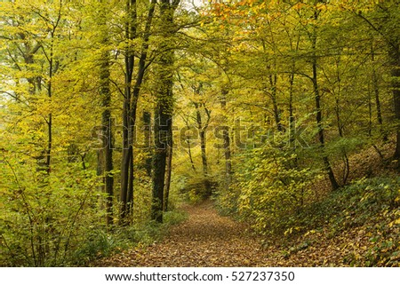 path in autumnal forest  #527237350