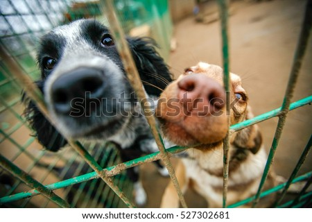 Dogs in an animal shelter waiting to be adopted. Selective focus Royalty-Free Stock Photo #527302681