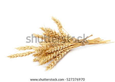 Sheaf of wheat ears isolated on white background. #527376970