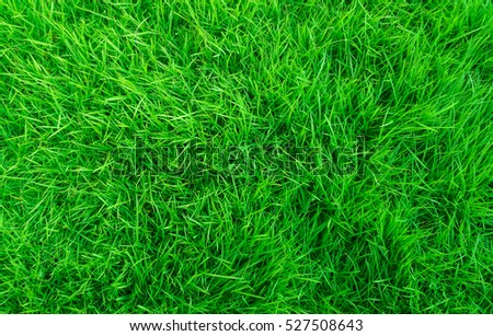 The texture of green grass surface for the background, Top view of grass field Ideal concept used for making green flooring, lawn for a training football pitch,  Golf Courses lawn pattern textured.