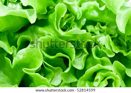 Fresh green Lettuce salad background #52814599