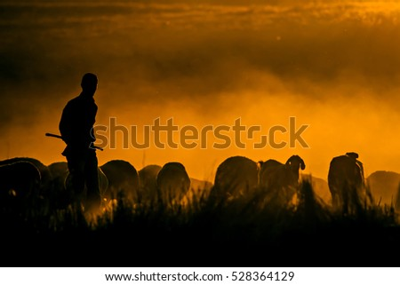 Sunset nature and shepherd. Sunset nature background. Sheeps and shepherd silhouette. #528364129