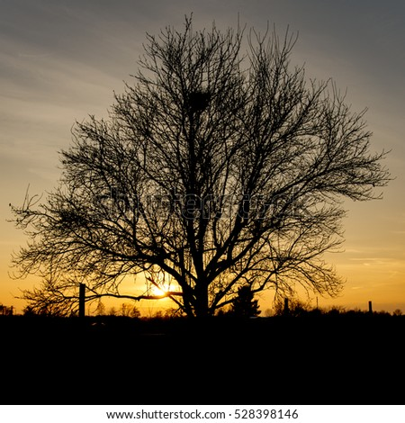 Single tree in front of warm orange sunset - square  #528398146