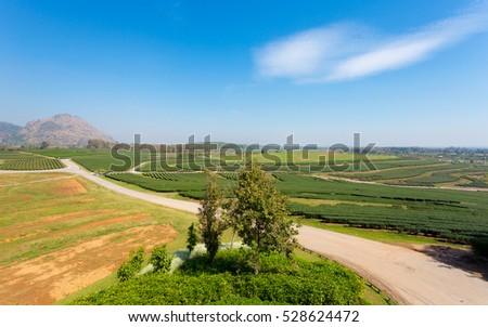 Prepare a tea plantation, Chiang Mai, Thailand #528624472