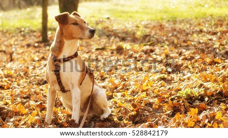 dog sitting in nature color of autumn  fall delight in forest with vibrant colors of autumn #528842179
