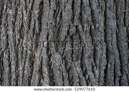 Old Wood Background. design, wood texture background   #529077610