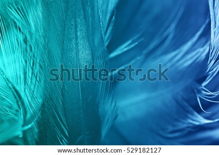 Green turquoise and blue color trends chicken feather texture background