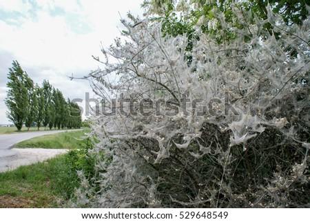 diseased plants #529648549
