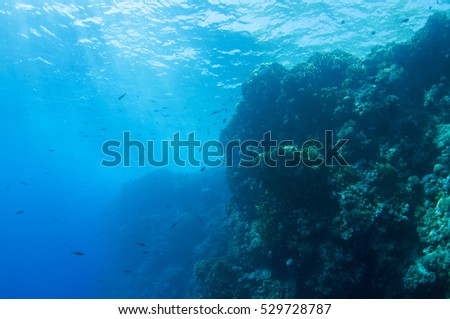Abstract underwater scene of Red sea, Egypt. #529728787