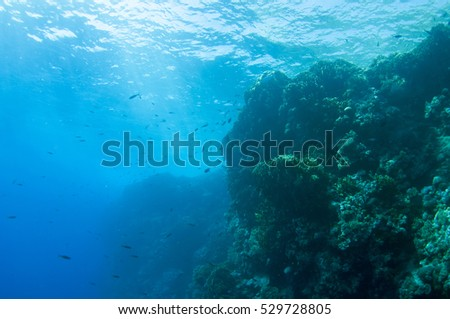 Abstract underwater scene of Red sea, Egypt. #529728805