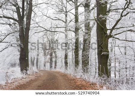 Frozen trees with the small way. Winter nature. #529740904