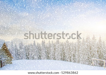 Mystical winter landscape of trees in sunlight during a blizzard (New Year, travel, Harmony - concept) #529863862
