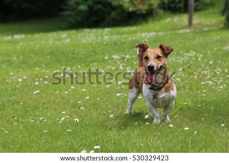 Smiling dog n grass #530329423
