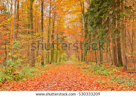 Forest in Autumn #530333209