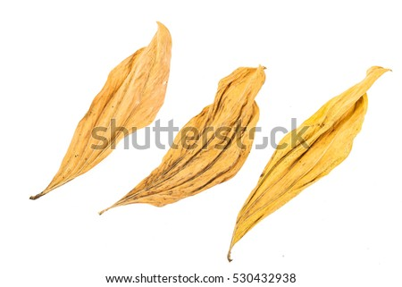 dry leaf on white background #530432938