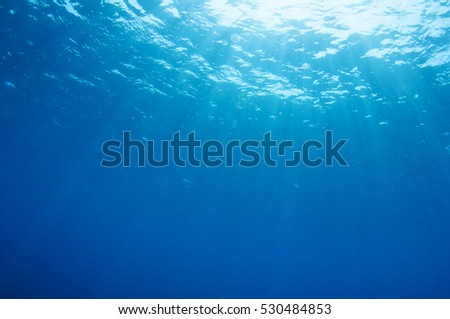 Abstract underwater scene of Red sea, Egypt. #530484853