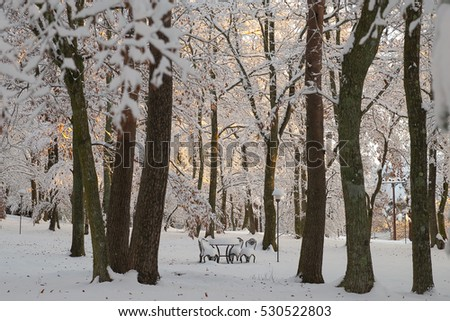 Garden in a winter with snow in sunrise. #530522803