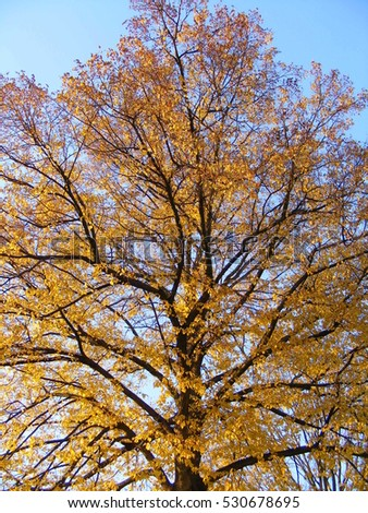 Tree in beautiful autumn colors #530678695