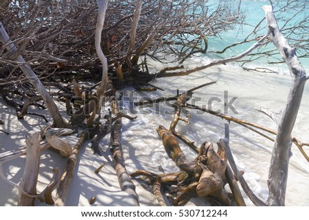 Dead trees and driftwood on an uninhabited island, Maldives #530712244