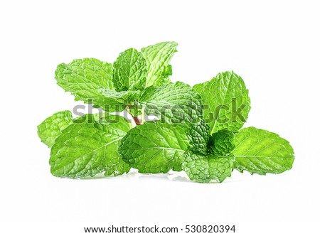 Green Mint leaf green plants isolated on white background, peppermint aromatic properties of strong teeth and fresh ivy as a ground cover plant types #530820394