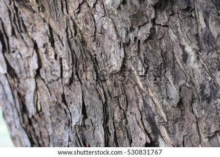 Tree bark texture background #530831767