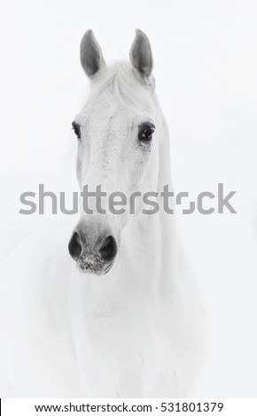 White horse in high key close up #531801379
