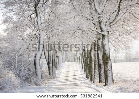 The road in a forest at winter time #531882541