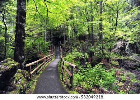 trail and small bridge with wooden railings over a stream in the woods, summer, Switzerland, Europe #532049218