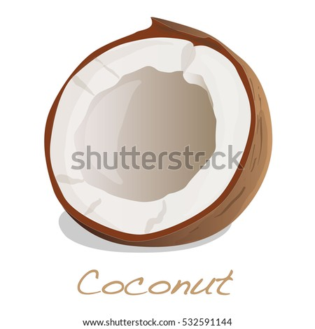 coconut cut vector on white background #532591144
