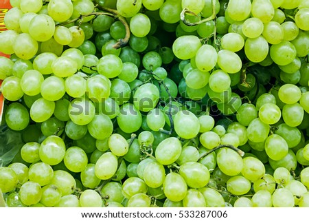 Cluster of green grapes vineyard, fruit and food #533287006