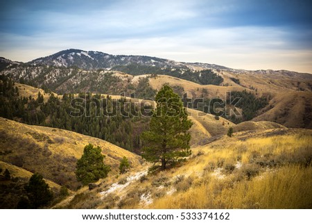 Mountain Top Landscape with Golden, Rolling Hills, Evergreen Trees and Blue, Cloudy Sky - Boise Idaho. #533374162