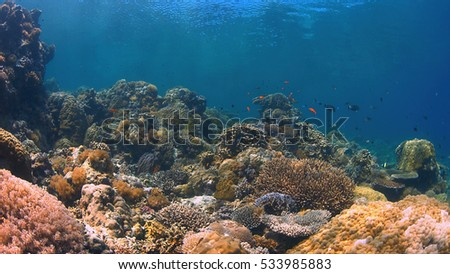 Colorful coral reef with plenty fish. #533985883