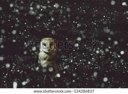 Barn owl winter portrait with dark and snow background. Soft focus on owl head, retouched picture.