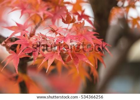 Autumn Forest in Yoshino, Nara, Japan #534366256