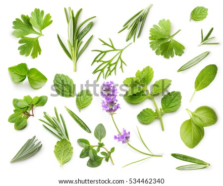 Fresh spices and herbs isolated on white background Royalty-Free Stock Photo #534462340