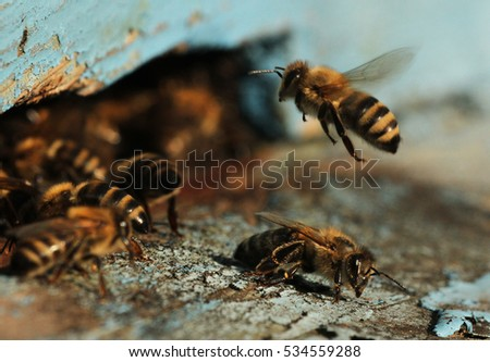 Honey Bees #534559288