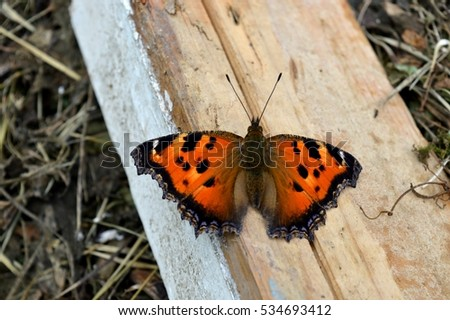 beautiful red butterfly #534693412